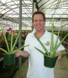 sansevieria cylindrica fan snake plant