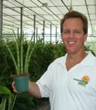 sansevieria cylindrica vase shape snake plant