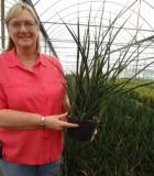sansevieria parva snake plant