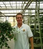shamrock ivy