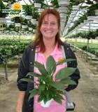 spathiphyllum petite Peace Lily