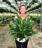 spathiphyllum petite Peace Lily
