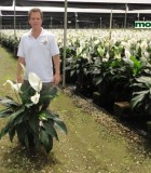 spathiphyllum sweet dario peace lily