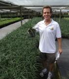 succulents agave spaghetti strap