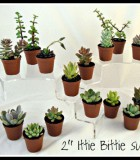succulents assorted