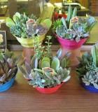 succulents dish garden