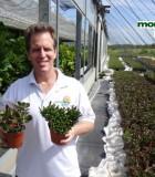 succulents jade