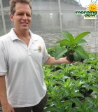 succulents kalanchoe mother of thousands