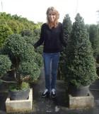 topiary eugenia pom pom cone