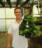 topiary ivy tree