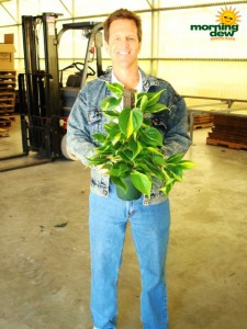 totems philodendron brasil
