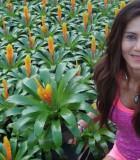 bromeliad vriesea miranda