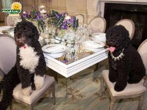 winston white house state dinner