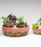 Dish Garden Burlap & Bows