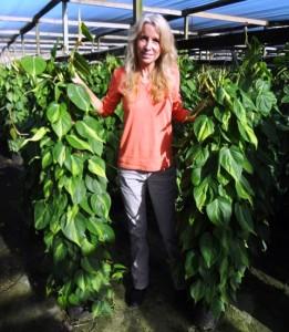 Totem Philodendron Brasil