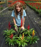 Bromeliad Vriesea Assorted
