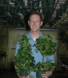Topiary Ivy Tree Globe