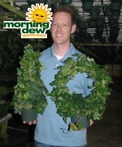 Topiary Ivy Tree Wreath