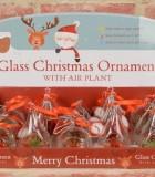 Christmas Tillandsia