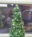 Topiary Ficus Repens