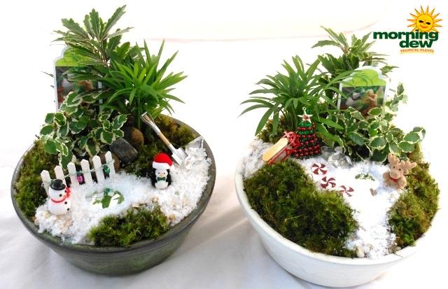 Dish Garden Morning Dew Tropical Plants