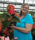 Flowering Anthurium Assorted 6 in