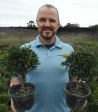 Bonsai Eugenia Myrtifolia Starts