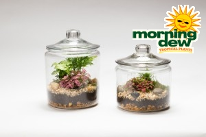 Terrarium Apothecary Jar