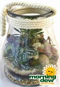 Terrarium Canister Style Glass Jar