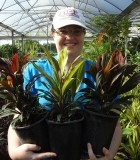 Cordyline Assorted