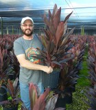 Cordyline Tropical Red