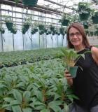 Chlorophytum Mandarin spider plant