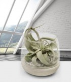 LiveTrends Cement Base Terrarium
