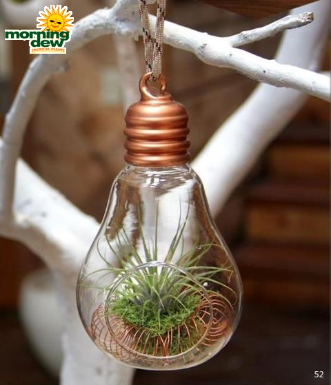 Livetrends Copper Light Of Life 4 In