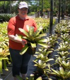 Bromeliad Neoregelia Dragon 8 in