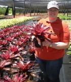 Bromeliad Neoregelia Mars