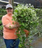 Hanging Basket Pothos N Joy 10 in
