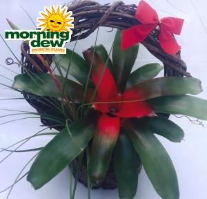 Christmas Bromeliad Wreath Planter