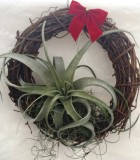 christmas wreath xerographica