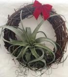 christmas wreath xerographica