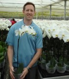 Orchid Phalaenopsis White Swan