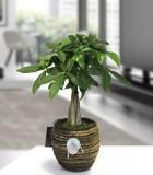 LiveTrends Zen Basket Small