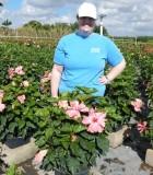 Hibiscus Bush double pink