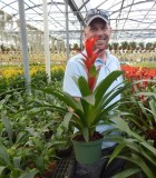 Bromeliad Guzmania Rostara 5 in
