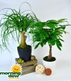 bonsai exotic dish garden