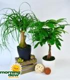 bonsai exotic dish garden