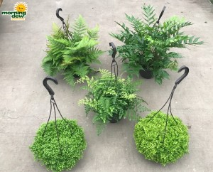 HB Fern Assorted 8 in