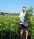 Podocarpus Maki 10 in