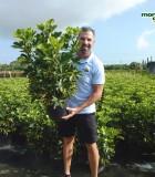 Schefflera Arboricola Bush Gold Capella 10 in
