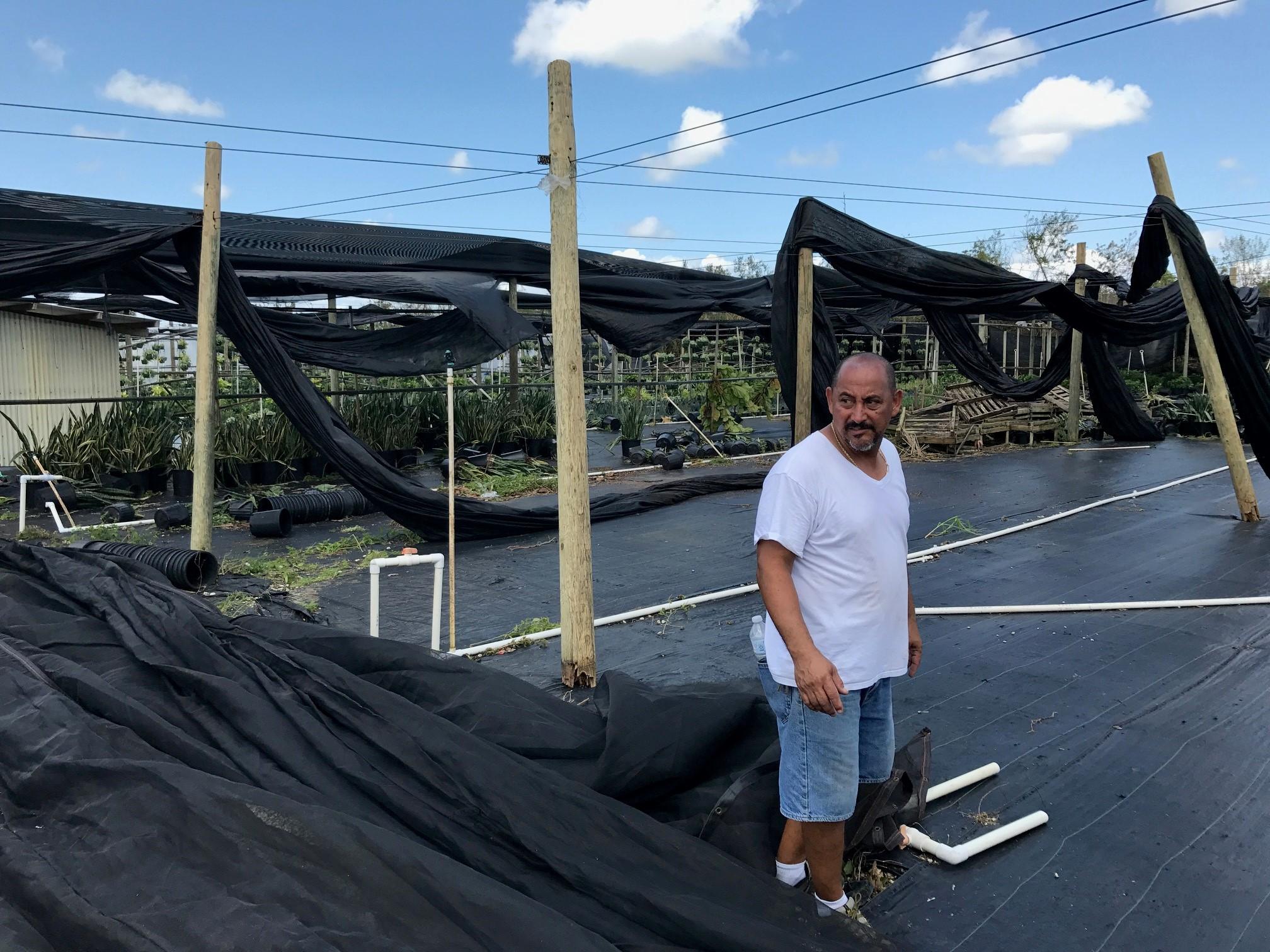 Nursery Hurricane Irma4